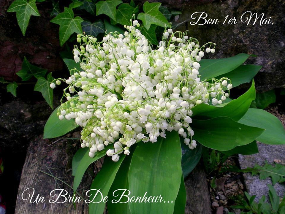 Bon 1er Mai. Un Brin de Bonheur...