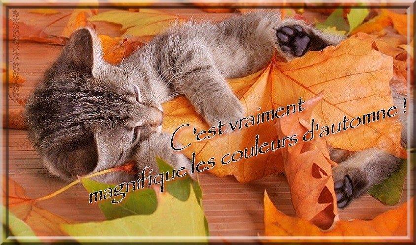 Automne images photos et illustrations gratuites pour facebook page 2 - Images d automne gratuites ...