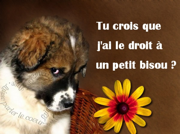 Bisous 1