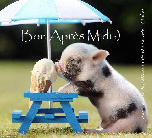 Bon Après Midi :)