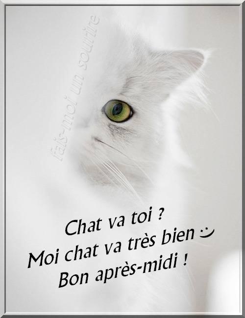 Chat va toi ? Moi chat va très bien :) Bon après-midi !