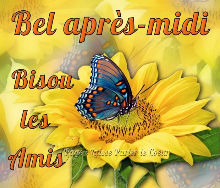 Papillon image 9