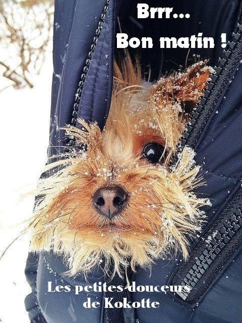 Brrr... Bon matin !