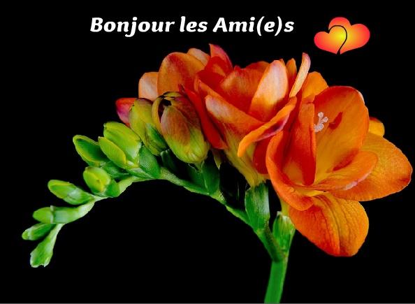 Bonjour les Ami(e)s