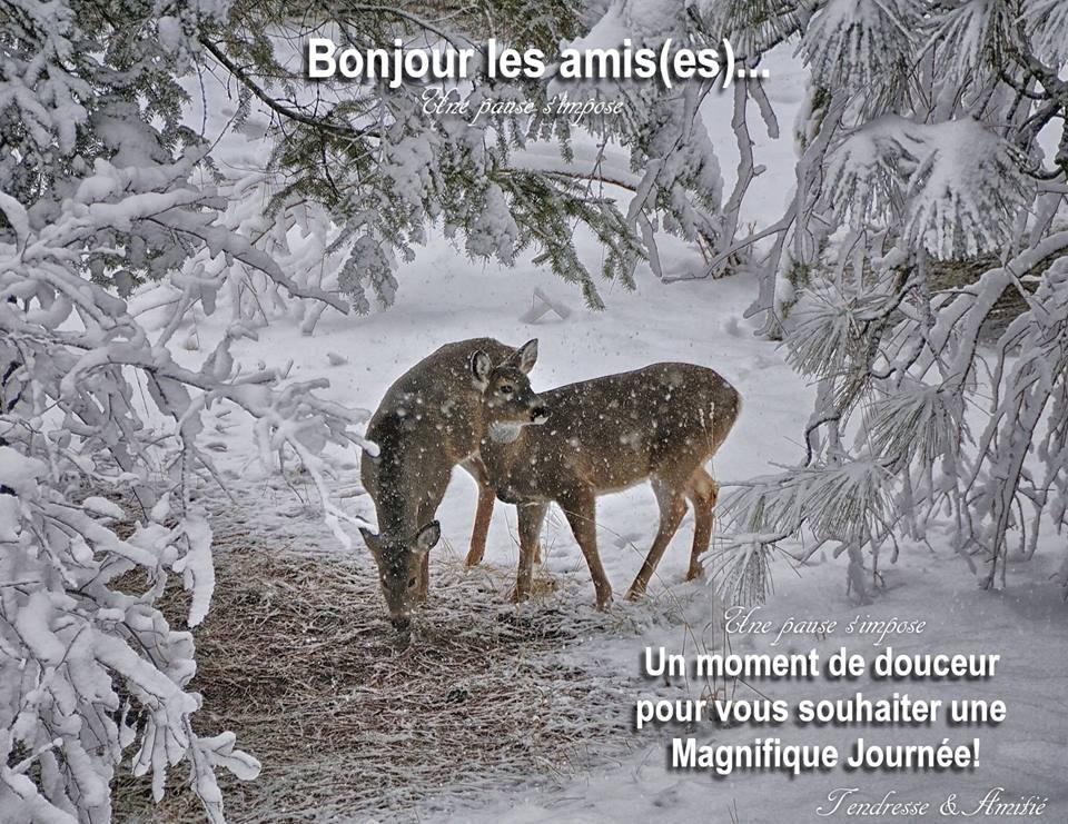 bonjour_066