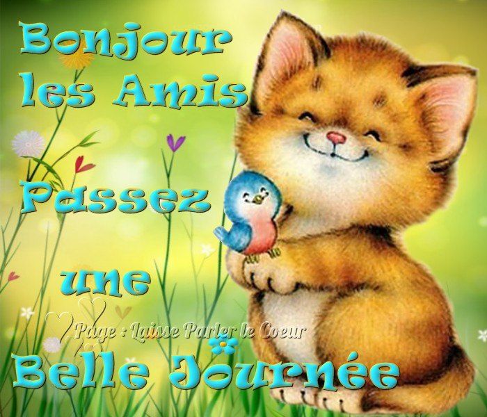 Bonjour image 14