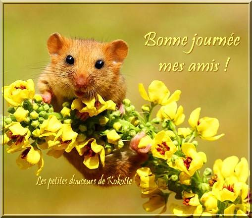 Bonne journée mes amis !