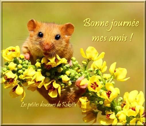 Bonne journée mes amis !
