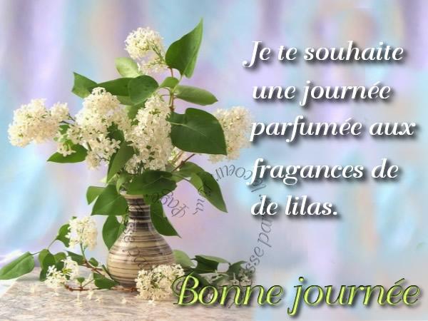 Je te souhaite une journée parfumée aux fragrances de de lilas