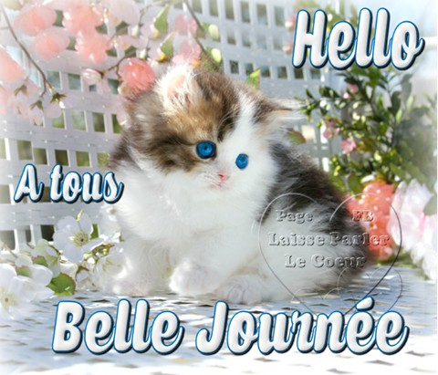 Hello à tous, Belle Journée