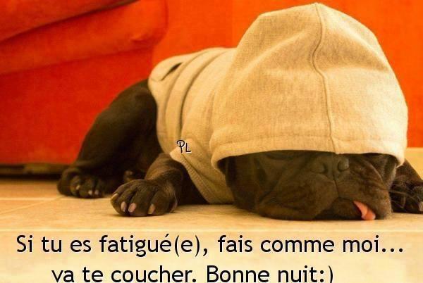 Bonne Nuit Humour image 6