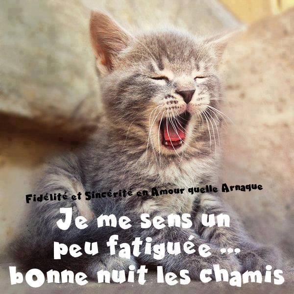 photos de chats gratuites Créteil