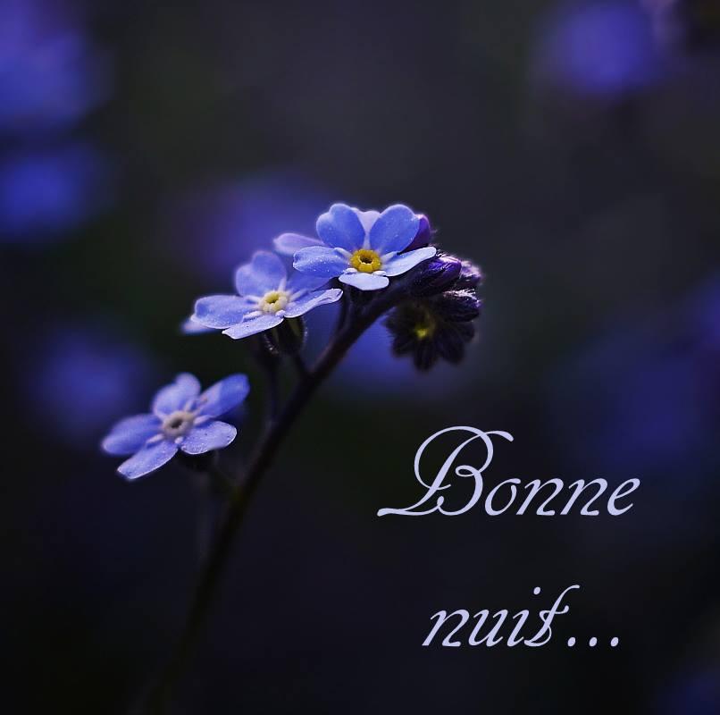 Bonne nuit image 6