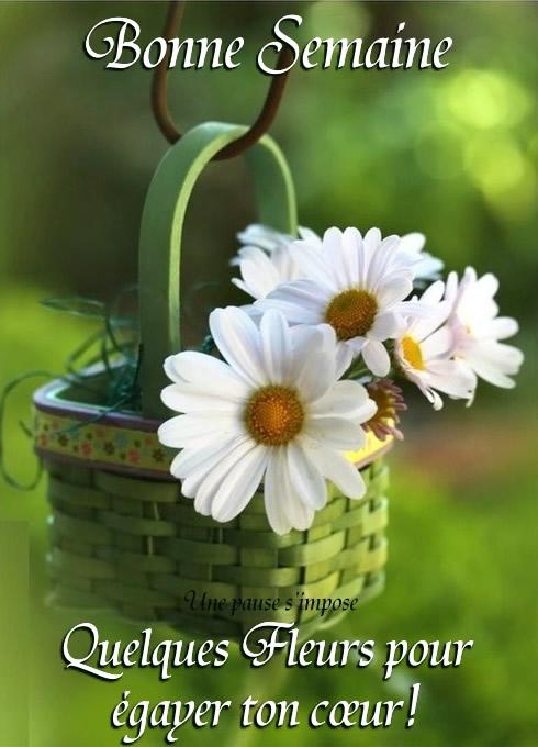 Bonne Semaine. Quelques fleurs pour...