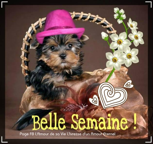 Belle Semaine !