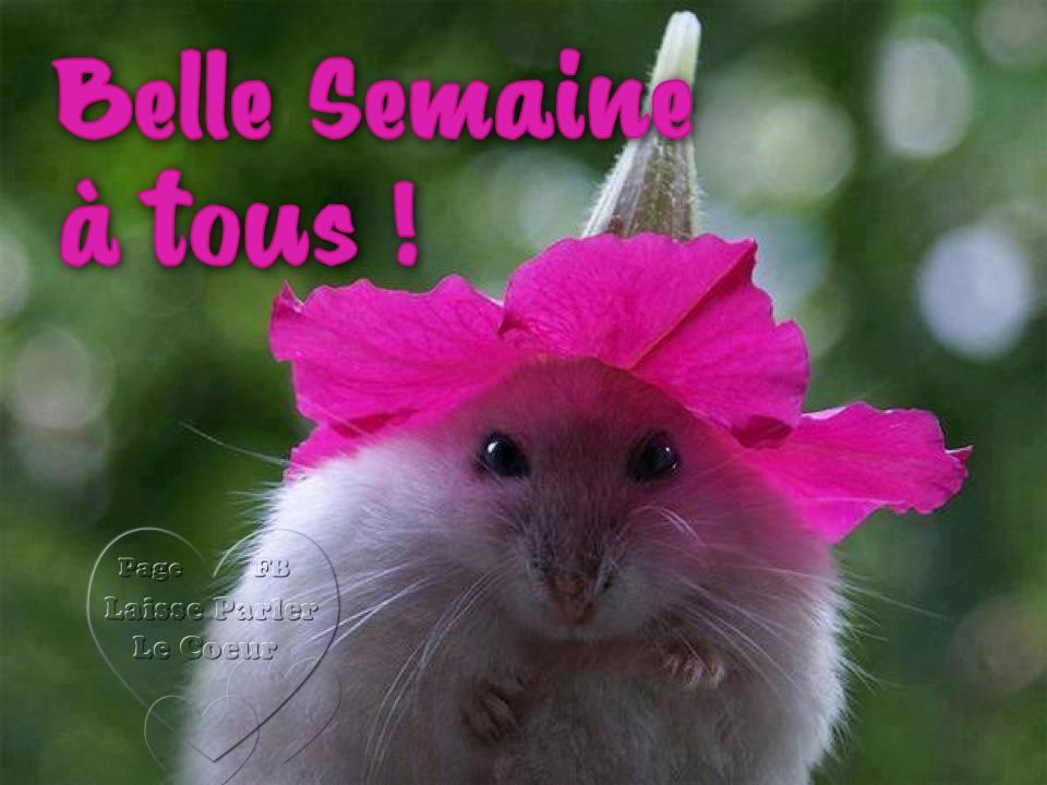 Belle Semaine à tous !