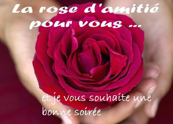 La rose d'amitié pour vous... et je vous souhaite une bonne soirée