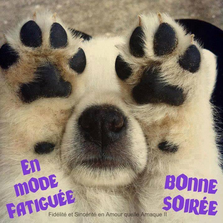 bonne-soiree_104
