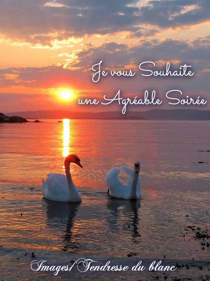 Bonne soirée image 13