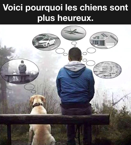 Voici pourquoi les chiens sont plus heureux