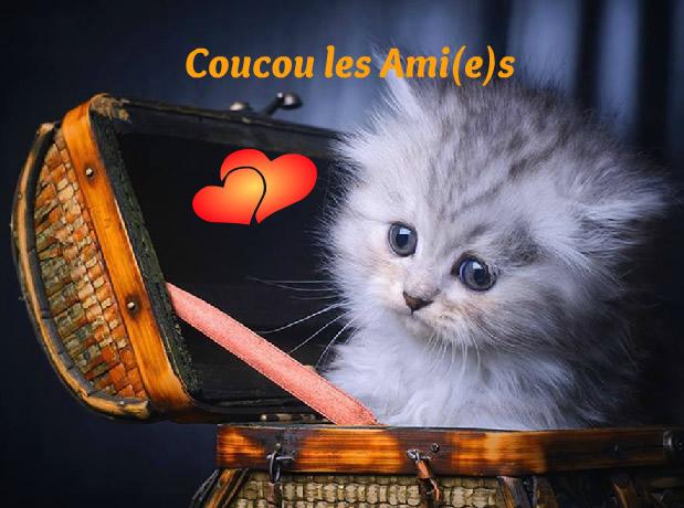 Coucou les Ami(e)s