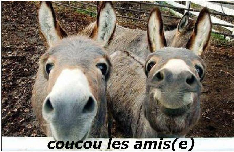Coucou image 4