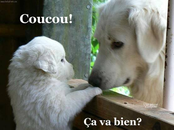 Coucou image 15