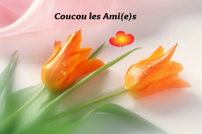 Coucou image 14