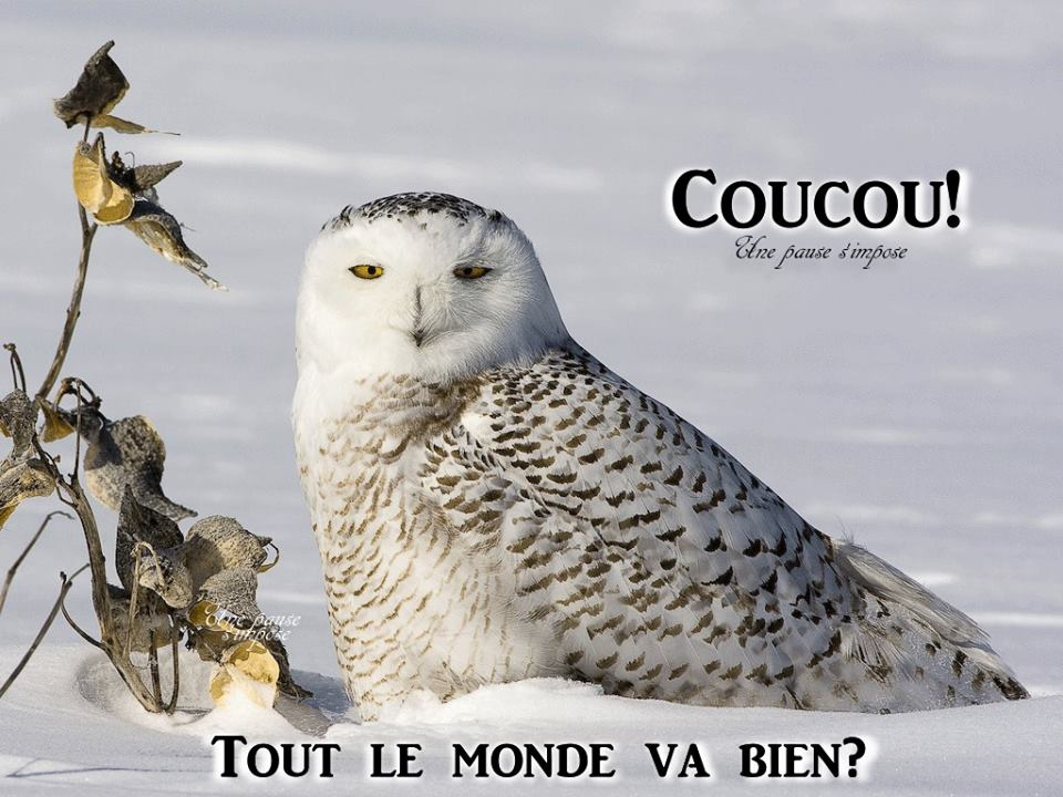 Coucou image 12