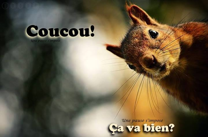 Coucou image 6