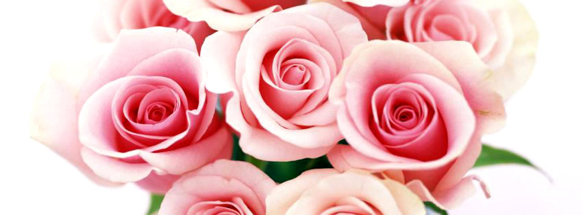 Roses blanches et roses
