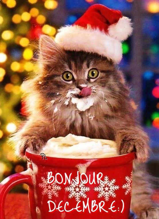 Résultats de recherche d'images pour «bonjour décembre»