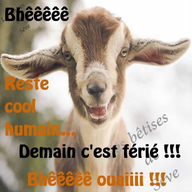 Bhêêêêê reste cool humain... Demain c'est férié !!!