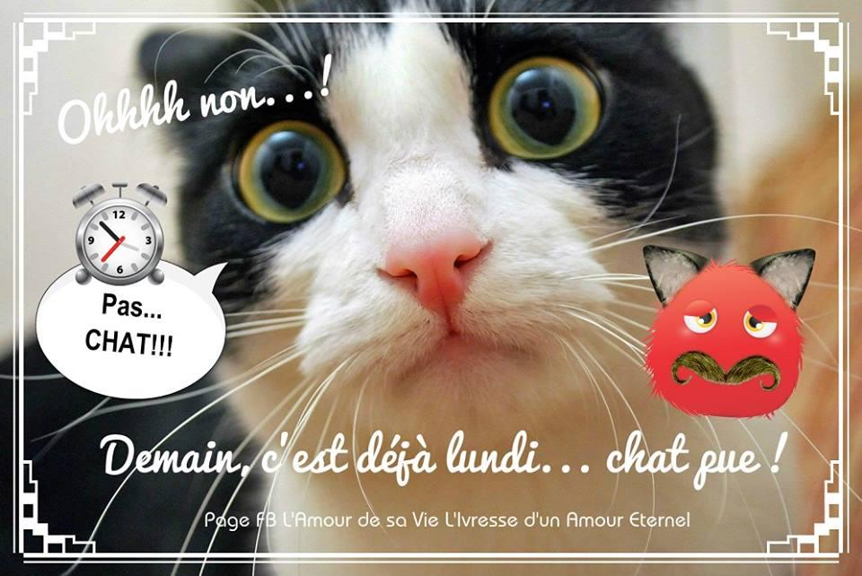 Ohhh non...! Demain, c'est déjà lundi... chat pue !