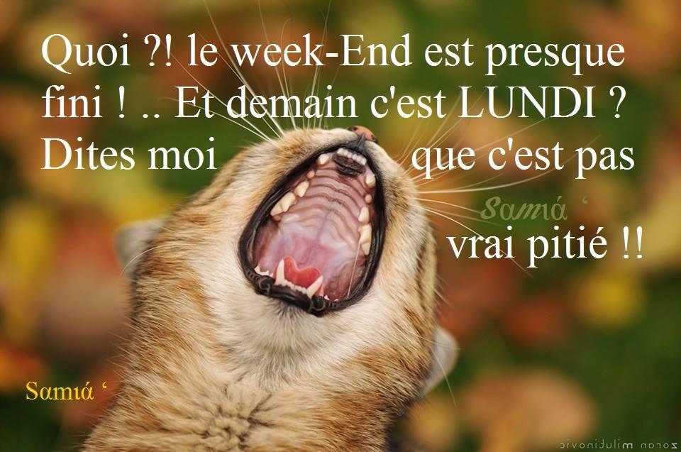 """Résultat de recherche d'images pour """"photos de chat non demain c'est lundi"""""""