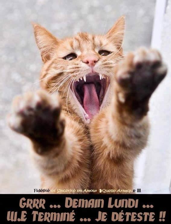 Grrr... Demain lundi... W.E. Terminé... Je déteste !!