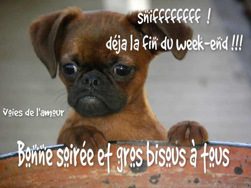 sniffffff! déjà la fin du week-end !!!
