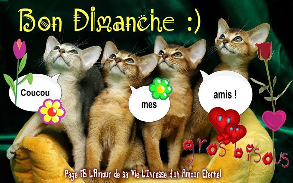 Bon Dimanche :) Coucou mes amis !