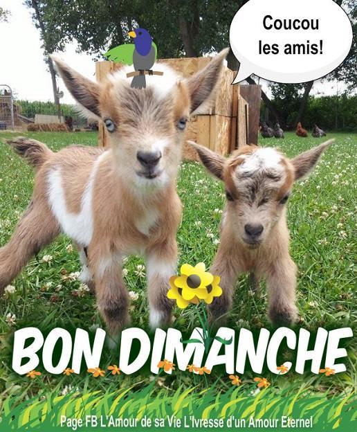 Bon Dimanche image 6