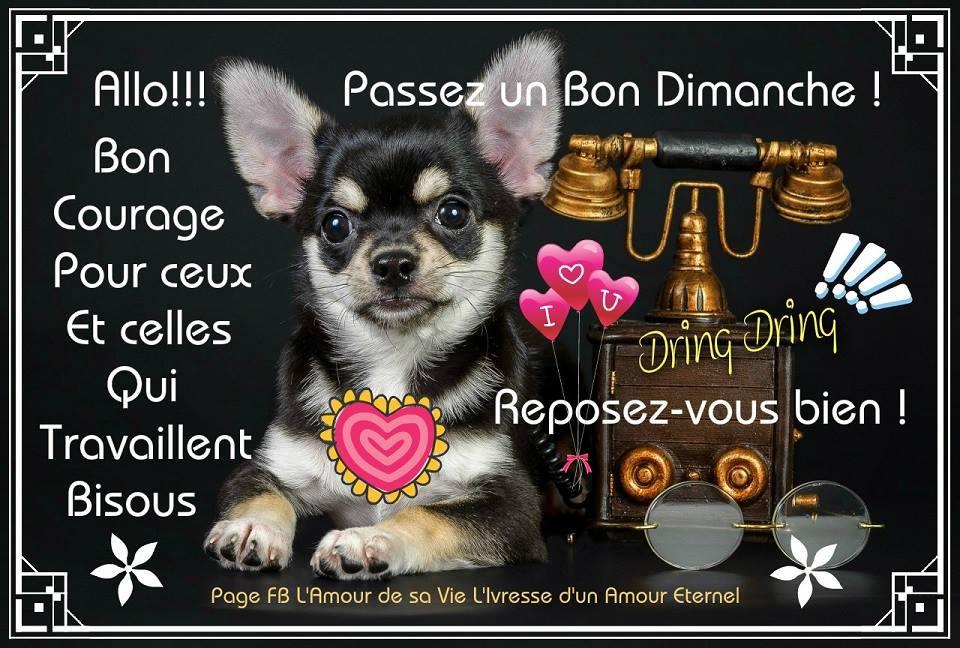 Bon Dimanche image 7