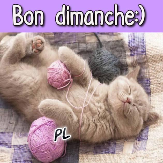 Salut,bonjour,bonsoir,bonne nuit, a bientôt... - Page 11 Dimanche_145