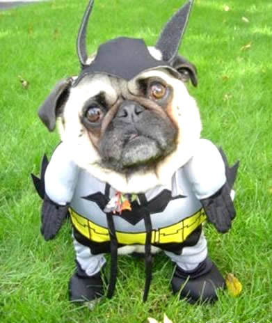 Batman Bulldog