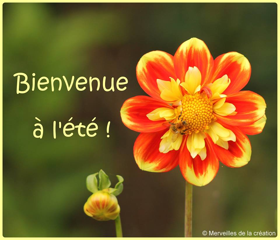 ᐅ 27 Été images, photos et illustrations pour facebook - BonnesImages
