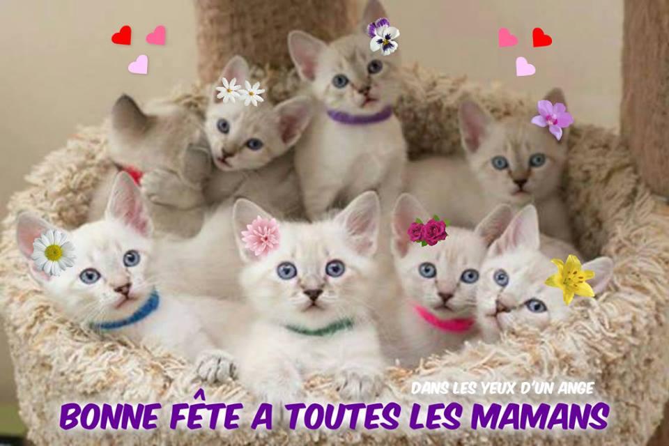 Bonne fête a toutes les mamans