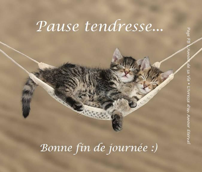 Pause tendresse... Bonne fin...