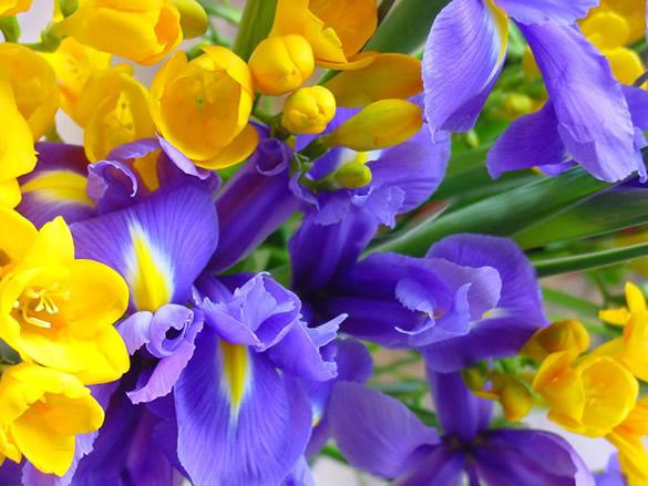 Jolies fleurs jaunes et bleues