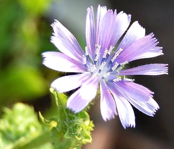 Fleurs image 10