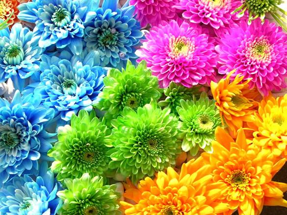 Fleurs image 12