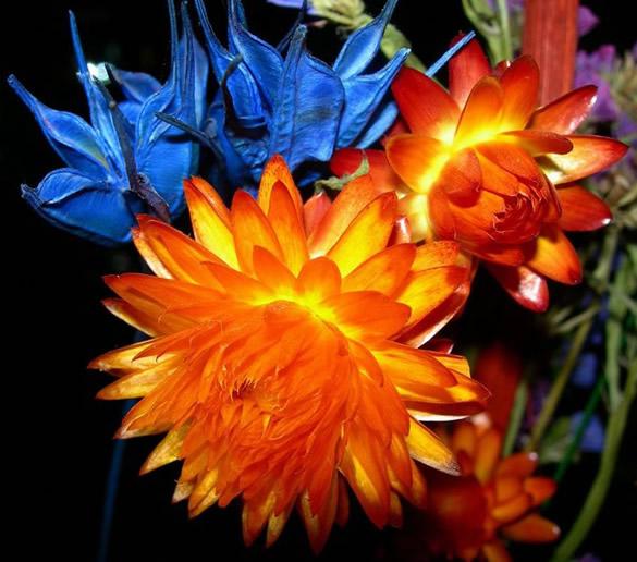 Belles fleurs orange et bleue