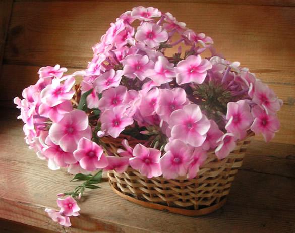 Bouquet de fleurs roses dans un panier